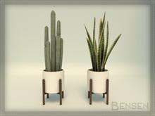 'Hjørring' Plants