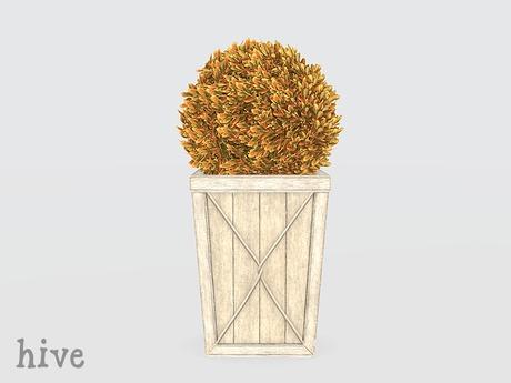 hive // sphere boxwood topiary . autumn