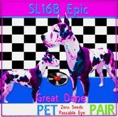 BB SL16 B Epic Great Dane Pair