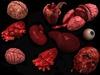Body organs2 pic