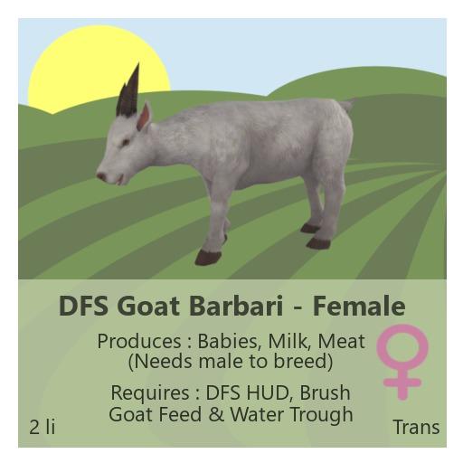 DFS Goat Barbari - Female