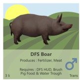 DFS Boar