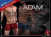 Adam Mesh body