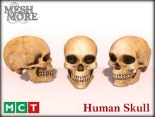 M&M Mesh Human Skull, Halloween Skull, Halloween Decoration