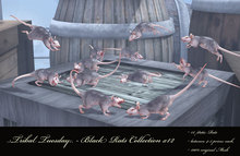 .:Tribal Tuesday:. - Black Rats Collection x12 (boxed)