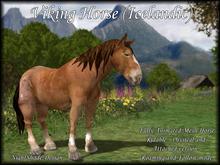 Viking Horse - Icelandic