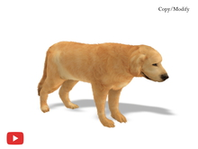 COPY/MODIFY | Animpet Animated Golden Retriever Animesh Dog 18 ANIMATIONS, ENDLESS AO