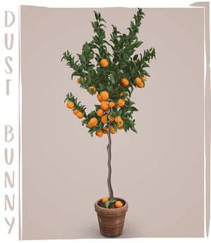 dust bunny . dwarf fruit trees . clementine tree . boxed