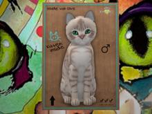 ♂ MEGAPUSS!! Australian Mist - Lilac Marble - UTP - KittyCats - New Born Kitten