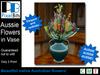 Advert   australian flowers in vase