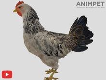 COPY/MODIFY | Animpet Animated Animesh Chicken