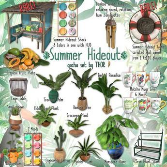 ..::THOR::.. Euphorbia Cactus