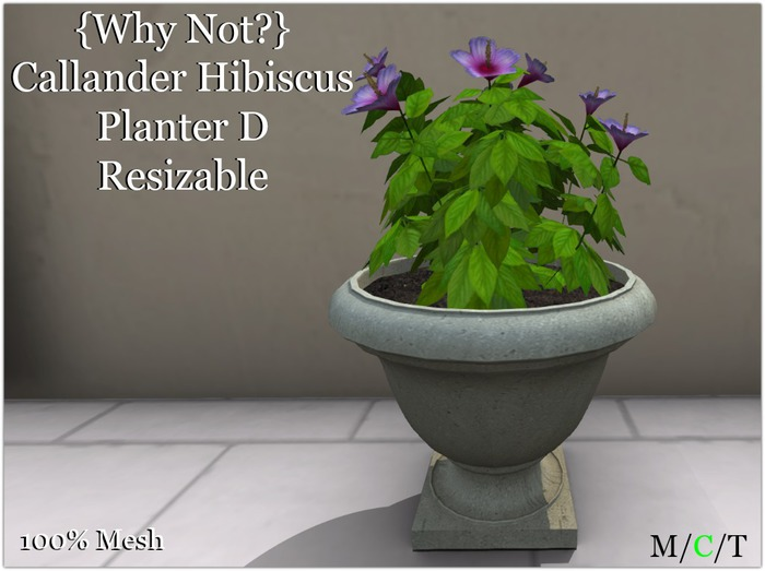{Why Not?} Callander Hibiscus Planter D-Boxed