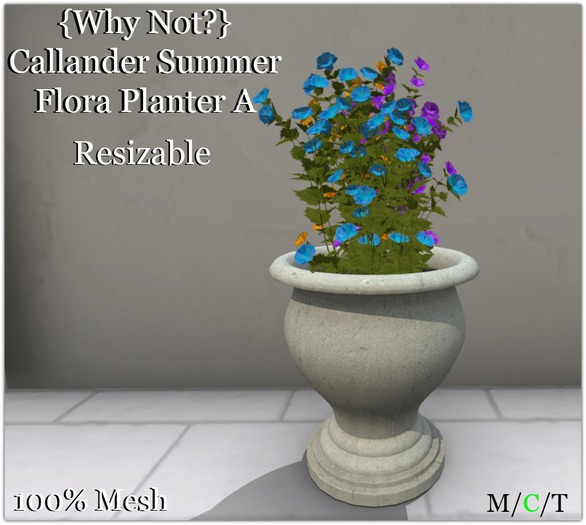 {Why Not?} Callander Summer Flora Planter A-Boxed