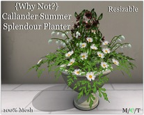 {Why Not?} Callander Summer Splendour Planter -Boxed
