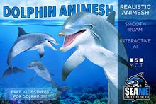 [SM] Dolphin Animesh (Boxing)