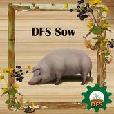 DFS Sow