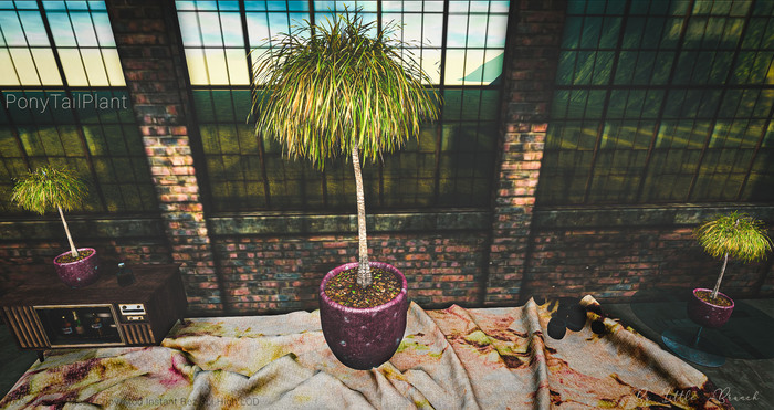 LB Pony Tail Plant Mesh Potted