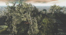 LB Olive Tree Shade Animated Seasons