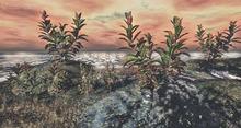 LB Croton Plant v1 Mesh