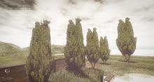 LB Italian Cypress v2 Animated Seasons