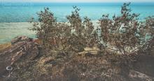 LB Olive Tree Shrub Animated Seasons