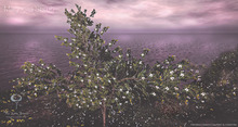 Southern Magnolia Shrub Animated 4 Seasons