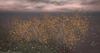 LB River Birch Shrub Animated 4 Seasons
