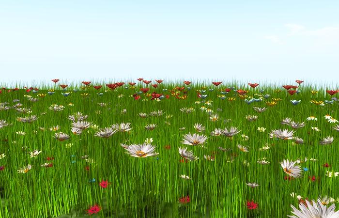 Jad Garden - flowers grass spring ground cover