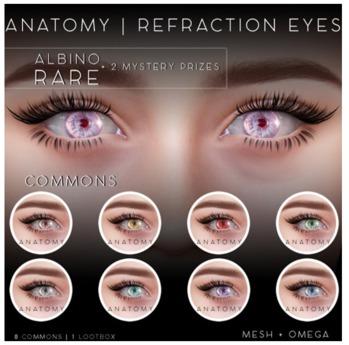 ANATOMY - REFRACTION EYES - COMMON - GREY