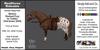 *E* RealHorse Animesh Rideable Horse - Shetland  Pony Western  [Add & Click] XS/S