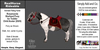 *E* RealHorse Rideable - Shetland Rosamunda  [Add & Click] XS/S