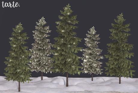 tarte. fir trees