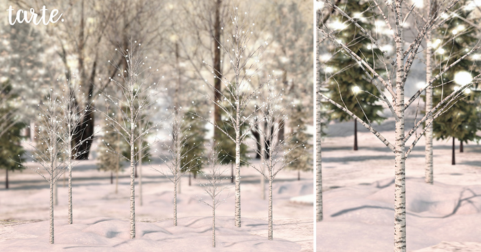 tarte. lighted birch trees
