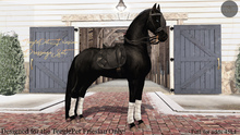 Cheval D'or - TeeglePet Friesian - Dressage Set. (Box)