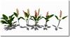 Tropical plant set 025