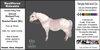 *E* RealHorse Rideable - Shetland Unicorn [Add & Click] M/L