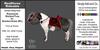 *E* RealHorse Rideable - Shetland Rosamunda [Add & Click] M/L