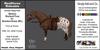*E* RealHorse Animesh Rideable Horse - Shetland  Pony  Pony Western [Add & Click] M/L