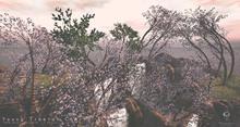 Young Tibetan Cherry Tree Animated 4 Seasons