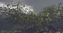 Oak Shrub Tree Animated 4 Seasons