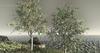 Wild Shingle Oak Animated 4 Seasons