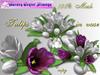 Tulip  in white vase_002TVB_6a
