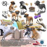 [Rezz Room] Pack Boxer Dog Puppy Sit