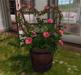 CJ Lena Bucket Planter pink Roses