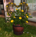 CJ Lena Bucket Planter yellow Roses