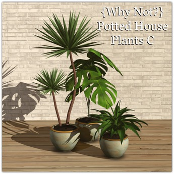{Why Not?} Potted House Plants C-Boxed