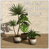 {Why Not?}  Potted House Plants A-Boxed