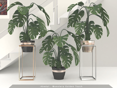 :Abedul:. Monstera Golden Touch [FatPack] Gold /Silver/ Black