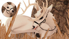 Cheval D'or / TWI Deer /  Leather Halter.